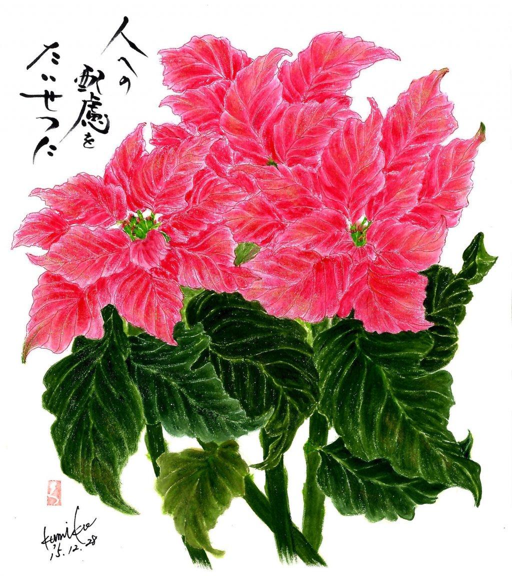 ポインセチア 花言葉